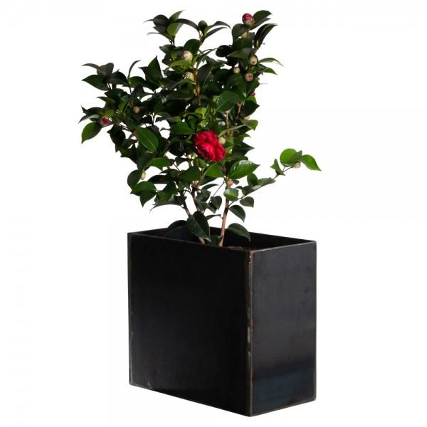Blumentopf | Blumenkasten |Übertopf | 4 mm Stahl |Unbehandelt | Rost | FlowerPot